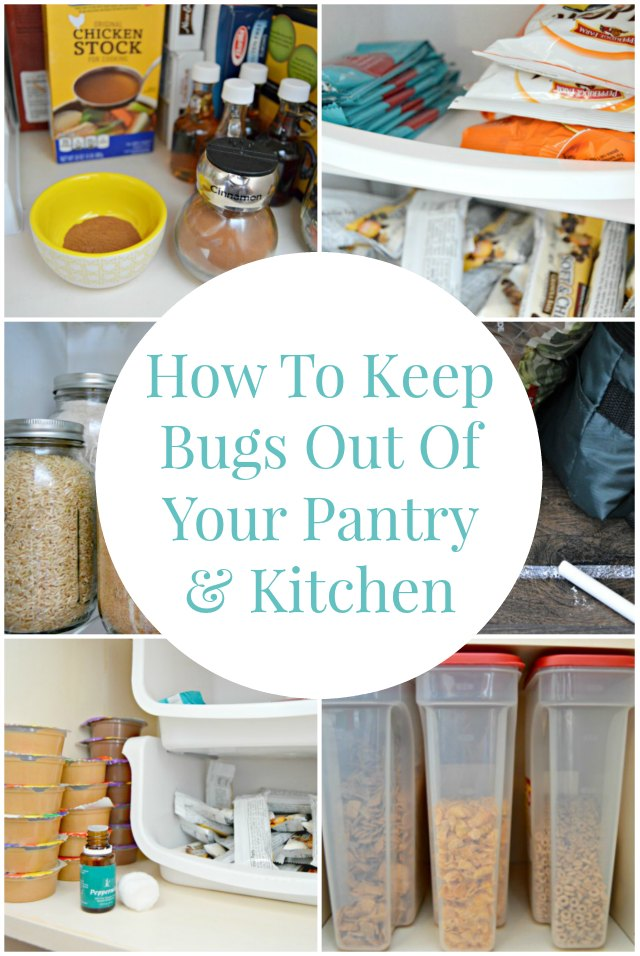 How To Keep Bad Luck Into Distance With These Two Plants: How To Keep Bugs Out Of Your Pantry And Kitchen