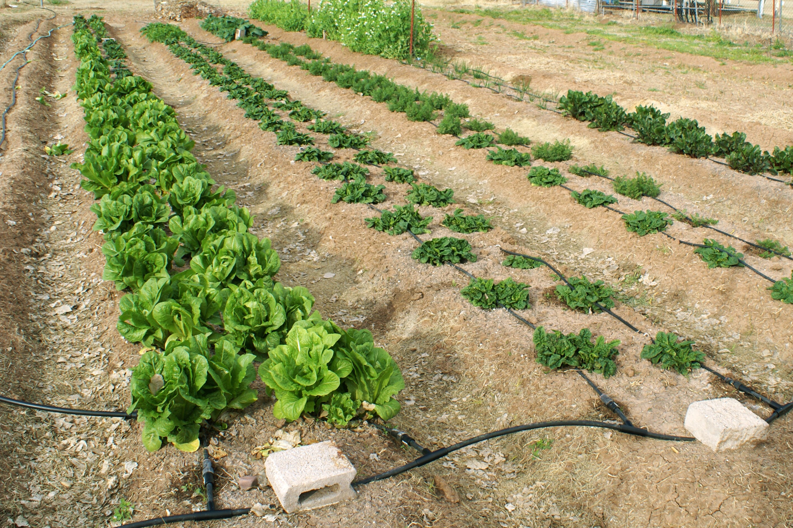 How to plant a vegetable garden in rows with pictures ehow - Spacing planting vegetables guide ...