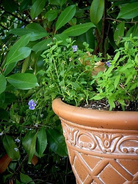 How To Find Inexpensive Pots For Plants Ehow
