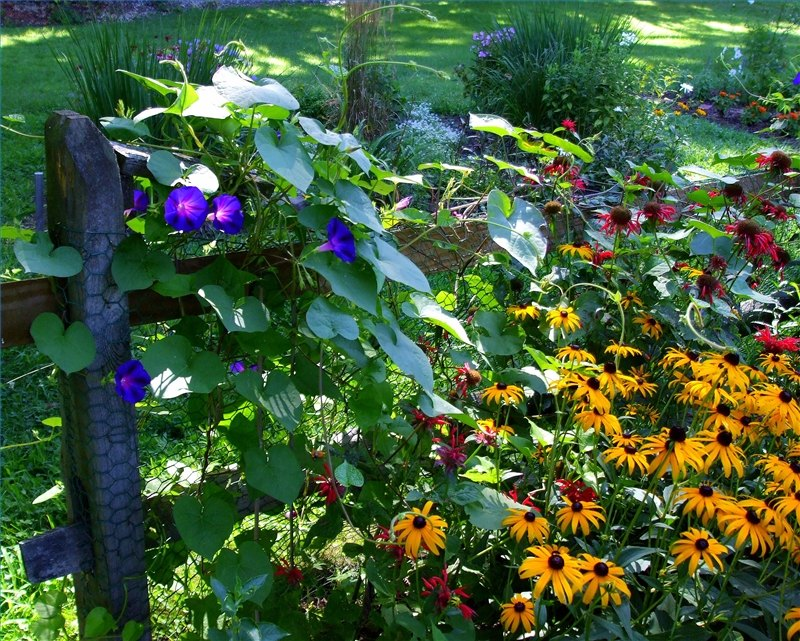 Garden  eHow