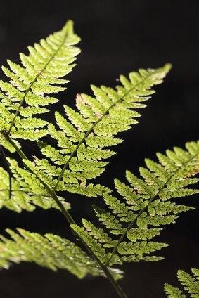 Nonflowering Plant Characteristics Ehow