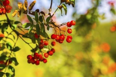 Learning about wild berries could save your life in a survival situation.
