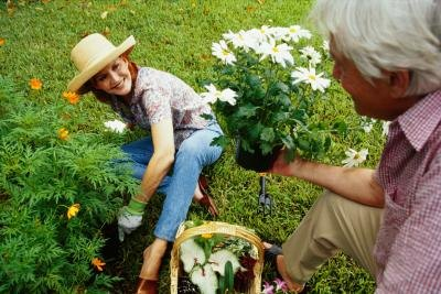 Mature couple gardening together.