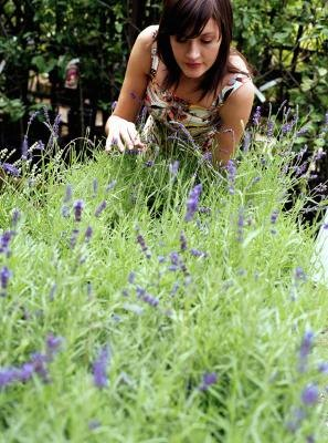 You can grow and sell lavender to be used in the making of potpourri.