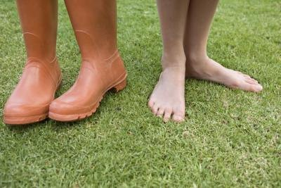 St. Augustine grass is not as tolerant to heavy foot traffic as other grass species.