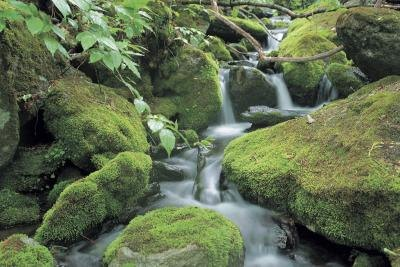 Moss enjoys damp, shaded areas such as forests and woodlands.