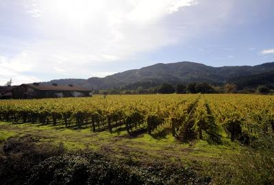 Napa Valley Vineyards, CA.