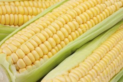 Corn has been grown for more than 7000 years