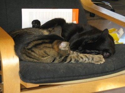 cat prednisone weight gain