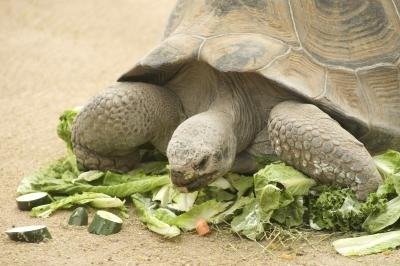 What Do Land Turtles Eat? eHow