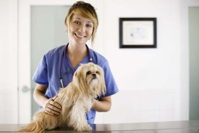 Natural Sedatives For Hyperactive Dogs