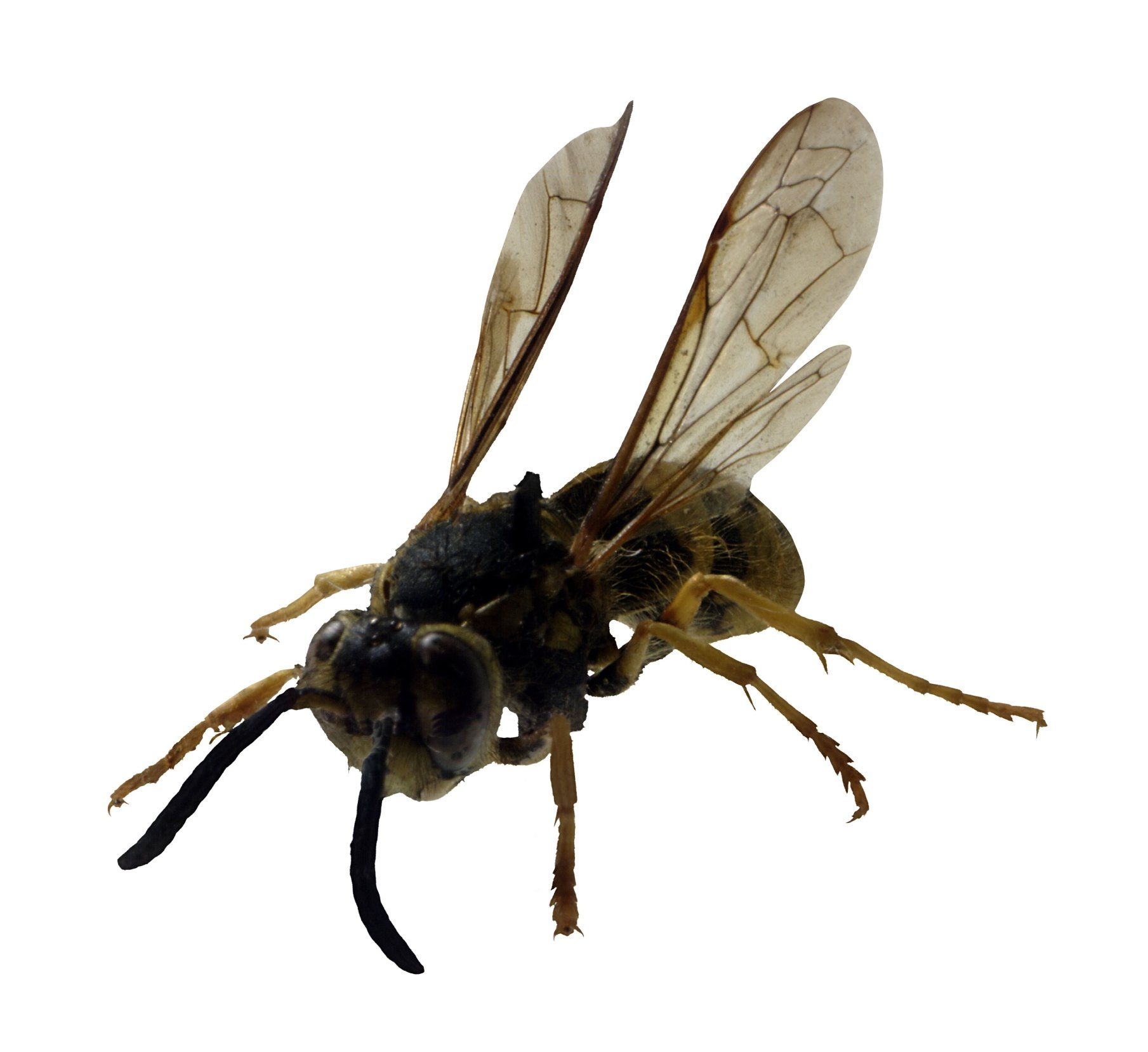 How To Get Rid Of Wasps & Yellow Jackets On A Wood Deck