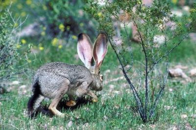Many types of predators may compete over the meal a rabbit provides.