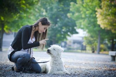 How I Achieved Maximum Success with Dogs