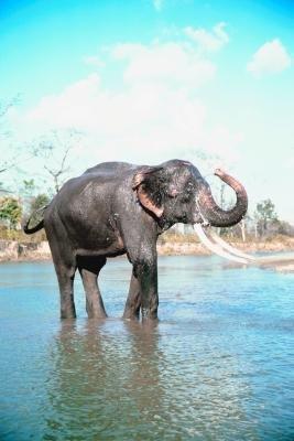 Gestation Period Of Dog Cat Elephant