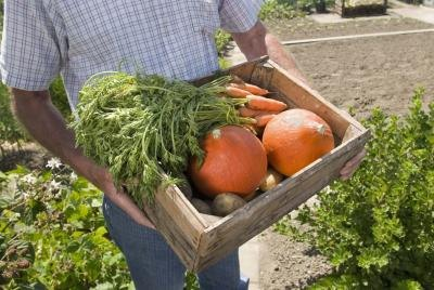 Feeding properly increases yield and quality of produce.