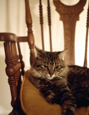 cat sprawled out