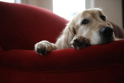How to stop dogs from chewing outdoor furniture