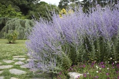 Article Woody Landscape Plants Design