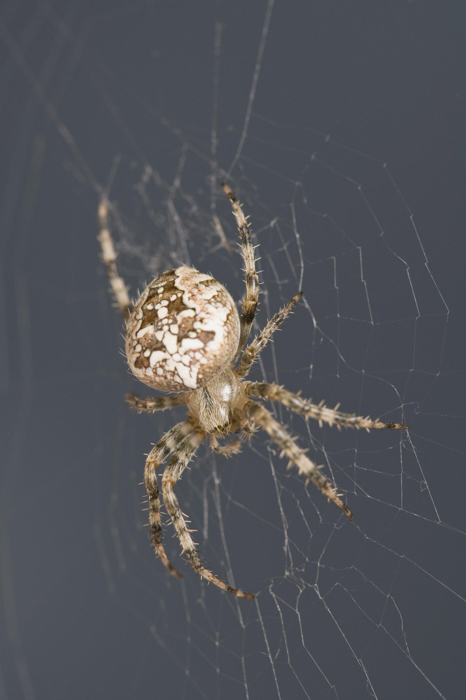 Natural Homemade Spider Pesticide for Inside the Home | eHow