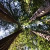 What Kind of Climate Does Redwood National Park Have?