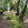 Places of Interest in the Tropical Rainforest
