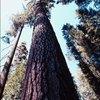 Visiting Sequoia National Park in December