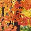 About the Smicksburg, Pennsylvania Fall Festival