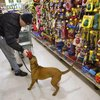 Laws Regarding Dogs in a Grocery Store