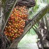 What Are the Health Benefits of Red Palm Oil?