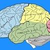 Left Brain & Right Brain Exercises