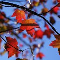 Fall Foliage Tours in Rochester