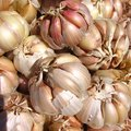 How to Prepare for the Gilroy Garlic Festival
