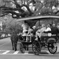 Charleston Plantation Tours