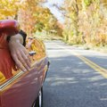 How to Plan a Cheap Road Trip