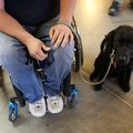Rules for Flying with a Service Dog