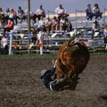 Tennessee Bull-Riding Events
