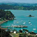 How to Swim With the Dolphins in the Bay of Islands