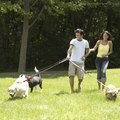 Campgrounds That Love Dogs in New England