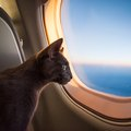 Airlines for Pet Travel