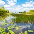 Interesting Facts About the Everglades National Park