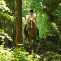 Places to Go Horseback Riding Near Hendersonville, North Carolina