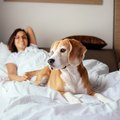 Cheap Pet Friendly Motels