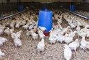 Cómo obtener un préstamo de una granja para criar gallinas