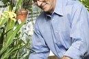 ¿Qué tipo de educación universitaria requieres para convertirte en un botánico?