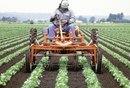 Cómo iniciar un negocio agrícola