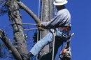 Tipos de empleo que puedes obtener con un título en silvicultura
