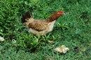 Cómo ser aprobado para abrir un restaurante de Chick-fil-A