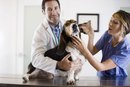 ¿Cuánto gana un técnico veterinario por hora?
