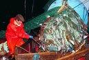 Cómo vender pescado congelado